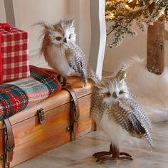 Set of Two Large Long-eared Owls
