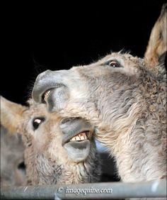 The Hee Haw Donkey Gang ~ donkey shenanigans! ❤️