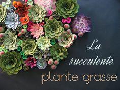 La plante grasse ou succulente, sont faciles d'entretien et très tendance. Voici quelques manières de les mettre en valeur votre succulente plante grasse.
