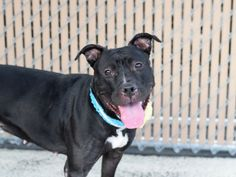 MIDNIGHT - A1084481 - - Brooklyn  Please Share:   TO BE DESTROYED…