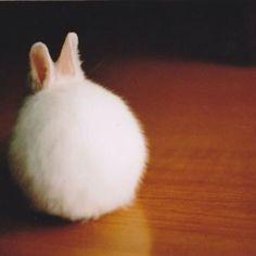 baby bunny...so soft