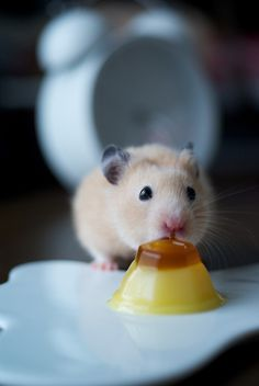 mouse eating tiny flan!