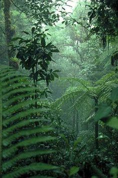 Tropical Rainforest Leaves Tropical rainforests