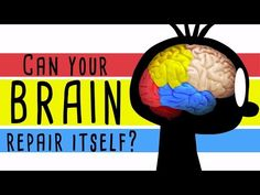 Could your brain repair itself? - Ralitsa Petrova | TED-Ed