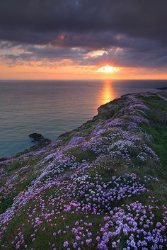 Pinks at Sunset by garykingphotography.com, via Flickr