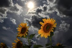 The 2016 Wisconsin Weather Calendar can be ordered here: channel3000.com/calendar