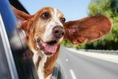 15 'Car Hacks' Every Drivers Needs To Know Hotel Pet, Car Hacks, All Cars, Cow, Survival, Pets, Accessories, Geography, Norte