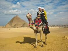 The average life expectancy of a camel is 40 to 50 years. A fully grown adult camel stands 1.85 m (6 ft 1 in) at the shoulder and 2.15 m (7 ft 1 in) at the hump. The hump rises about 75 cm (30 in) out of its body. Camels can run at up to 65 km/h (40 mph) in short bursts and sustain speeds of up to 40 km/h (25 mph).