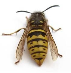 Pest Control Local Company Wasp Control, Pest Control Mice, Pest Removal,