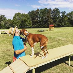The balance beam at the farm is a hit with the dogs. Anything elevated that they can see a different point of view they love