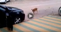 Dog Dances To Music And It's Hilarious