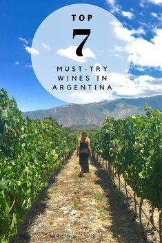 Top 7 Must-Try Wines in Argentina