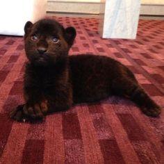 No viviendo en un mundo vivo: Black Jaguar White Tiger