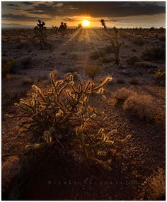 the Mojave Desert ~ #GeorgeTupak