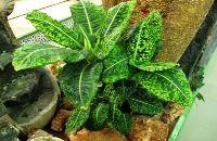 Exigencias de las plantas de interior
