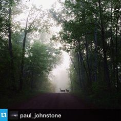 @paul_johnstone's final shot this week is from a misty morning in Crow Wing State Forest. He stood and watched these deer for a couple of minutes before they caught his scent and ran off. Thank you for sharing your beautiful pictures with us @paul_johnstone! #OnlyinMN
