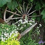 Funky Junk Interiors: Would love to find an old wheel for my yard!