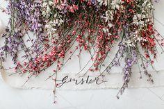 Blume des Monats Februar: Ginster