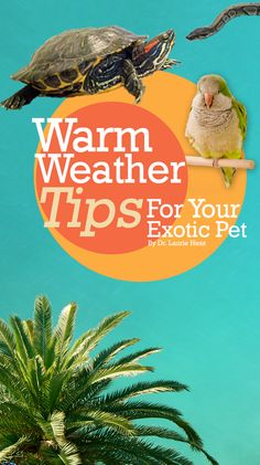 Warm weather tips for your exotic pet