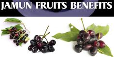 Jamun, or Indian blackberry is loaded with nutrients that collectively work toward improving health. Amazing Health Benefits and Uses of Jamun Fruit. This article brings to light various health benefits of Jamun.