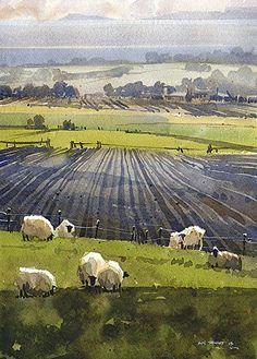 Fife Sheep by Iain Stewart Watercolor ~ 14 x 10