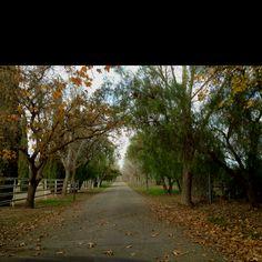 Santa Ynez....December Santa Ynez Valley, Amazing Destinations, December, Country Roads, Places, Lugares