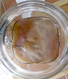 How to Make a Kombucha Scoby | Spoonful of Sugar Free
