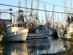 Bayou Shrimp Boats    They are down the bayous where I live in Terrebonne Parish. Travel to Chauvin,  Boudreaux Canal, down to Cocodrie!!