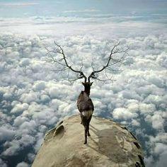 """Dijo la voz del camino:  """" Cuando las nubes te impidan ver el cielo y el ruido interno te ensordezca el alma, quítate los zapatos y camina la vida descalza sin mapa ni destino. Escucha con atención... cada paso es un latido y cada zancada es la meta, siempre en el punto de partida."""" . . Ada Luz Márquez"""