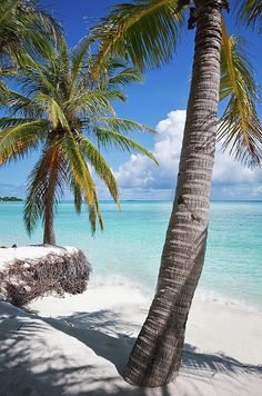 In the Shadow of Coconut Palms by Jenny Rainbow. Coconut palms on the shore of Maldivian island with view of the blue ocean. Relaxing zen like scene at the white sand beach in perfect sunny day.