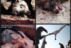 China : Please Stop Animal Abuse! https://www.change.org/p/china-please-stop-animal-abuse