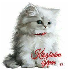 Cute Animal Illustration, Cute Animal Drawings, Animal Sketches, Cat Wallpaper, Animal Wallpaper, Cute Cats And Kittens, Kittens Cutest, Cat Drawing, Beautiful Cats
