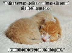 """""""If there were to be a universal sound depicting peace, I would surely vote for the purr."""""""