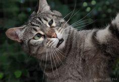 © copyright Marco Galli. Il mio amore, Gatto Velo by Galli Marco il fotografo dei gatti on 500px