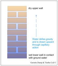 Rising Dampness is a blight that can affect external and internal walls alike. The source of dampness in this case comes is from ground water. The bricks and mortar in the dry upper parts of the wall acts like a wick and draws water upwards.