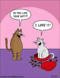 Weird cat actions