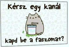 Funny Pins, Funny Memes, Hilarious, Jokes, Pusheen Cat, Grumpy Cat, Bitch Quotes, True Stories, Sarcasm