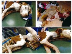 10/3/14 Skeletal dog discovered in Florida: Owner arrested for animal cruelty. Zola's former owner was arrested and is now facing a charge of felony third degree cruelty to animals.