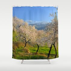 almond,flowers,white,trees, tree,trees,white,winter,mountains,landscapes,nature, arboles, bosques, sierra nevada, national park, nature, granada, spain, flowers, plants, colorful, horizontal, outdoors, nature,snow, landscape, exterior, europe, photography, fine art