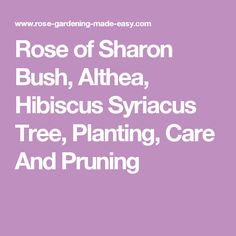 Rose of Sharon Bush, Althea, Hibiscus Syriacus Tree, Planting, Care And Pruning