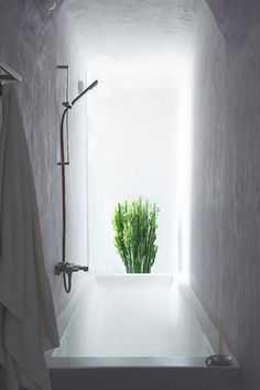 A  shower bath hallway with an iconic plant and outdoor light around the corner.