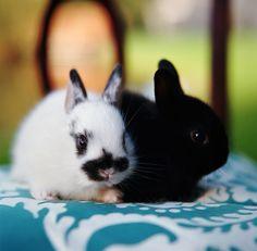 baby  bunnies <3 <3