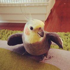 鳥フォトコンテスト「カブちゃん」さん