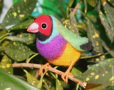 Купить Амадина Гульда (австралийская птичка) - птица, игрушка птица, игрушка из войлока, птичка