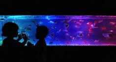 """""""Art Aquarium took place in Tokyo, Japan to showcase uniquely wild aquariums."""