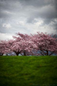 spring has sprung forward.  Trees in bloom.