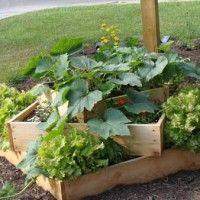 tips/ideas for a beginner vegetable garden