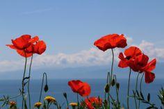 #spring #primavera #