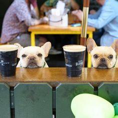 French Bulldogs and Brewskis, @frenchieleo