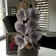 Orchidej...